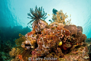 More beautiful reefs of The Solomon Sea. Nikon D300,Tokin... by Larry Polster 